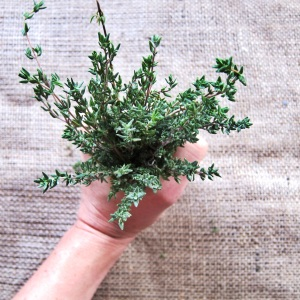 Thyme is on my side. Yes it is.